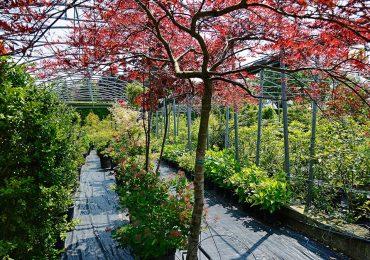 piante in vaso piccole e medie archiverde giardini