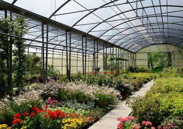 interno della serra archiverde giardini