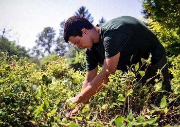 archiverde giardini manutenzione giardino