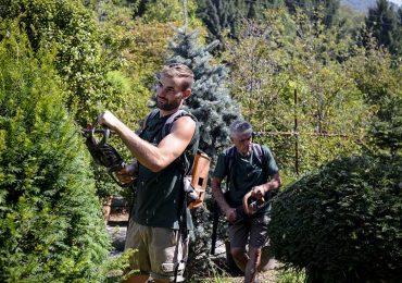 potatura siepi archiverde giardini