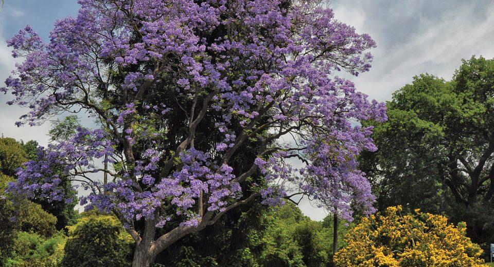 scegliere-albero-giardino-archiverde