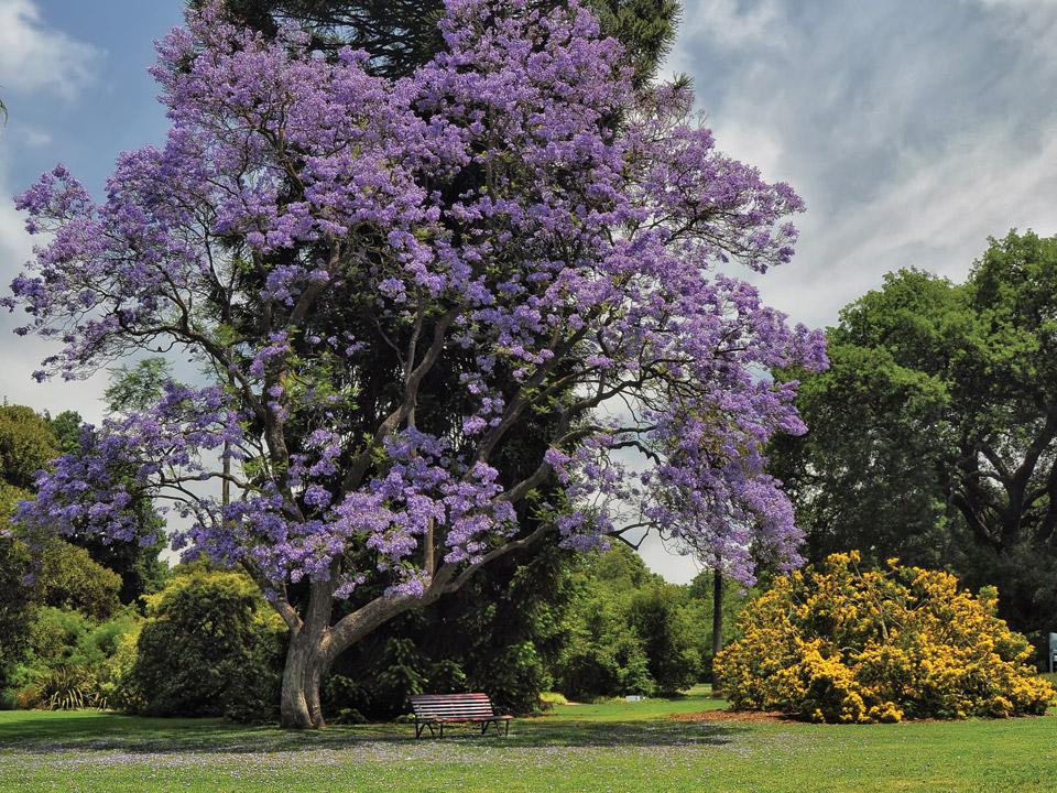 Come scegliere un albero per il giardino i consigli di - Come si progetta un giardino ...