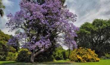 scegliere-albero-giardino