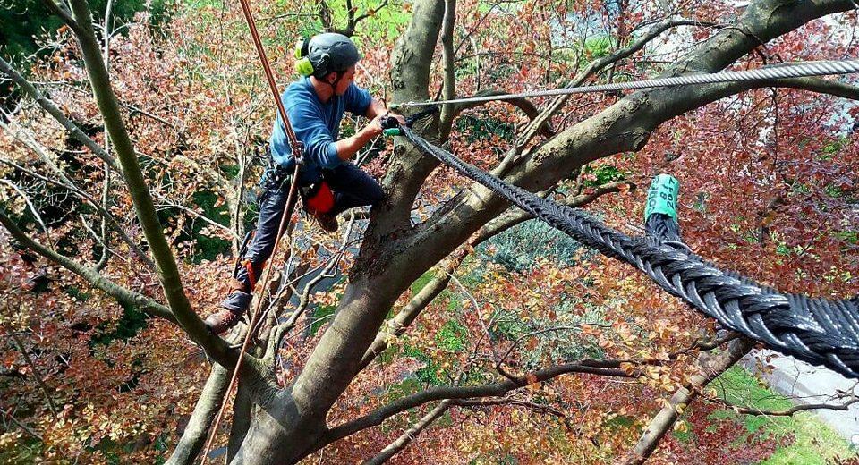 tree-climbing-archiverde-eupilio
