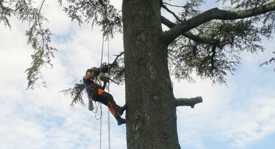tree-climbing-archiverde