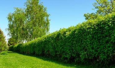siepe-giardino-archiverde