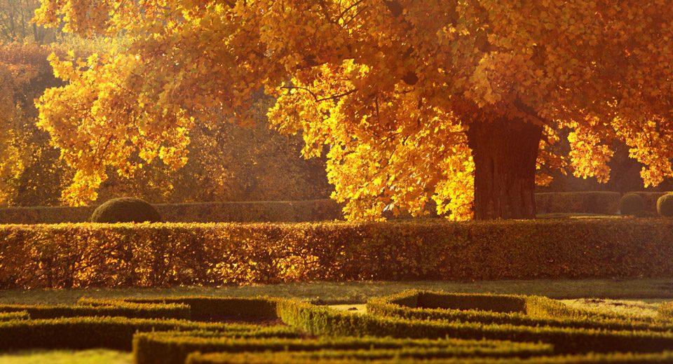 consigli-autunno-archiverde