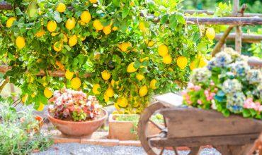 giardino-mediterraneo-archiverde-giardini