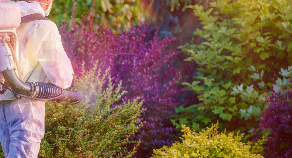 trattamenti-fitosanitari-archiverde-giardini