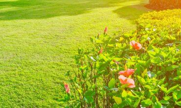 preparare-giardino-estate-archiverde-giardini-eupilio