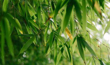 archiverde-giardino-bambu